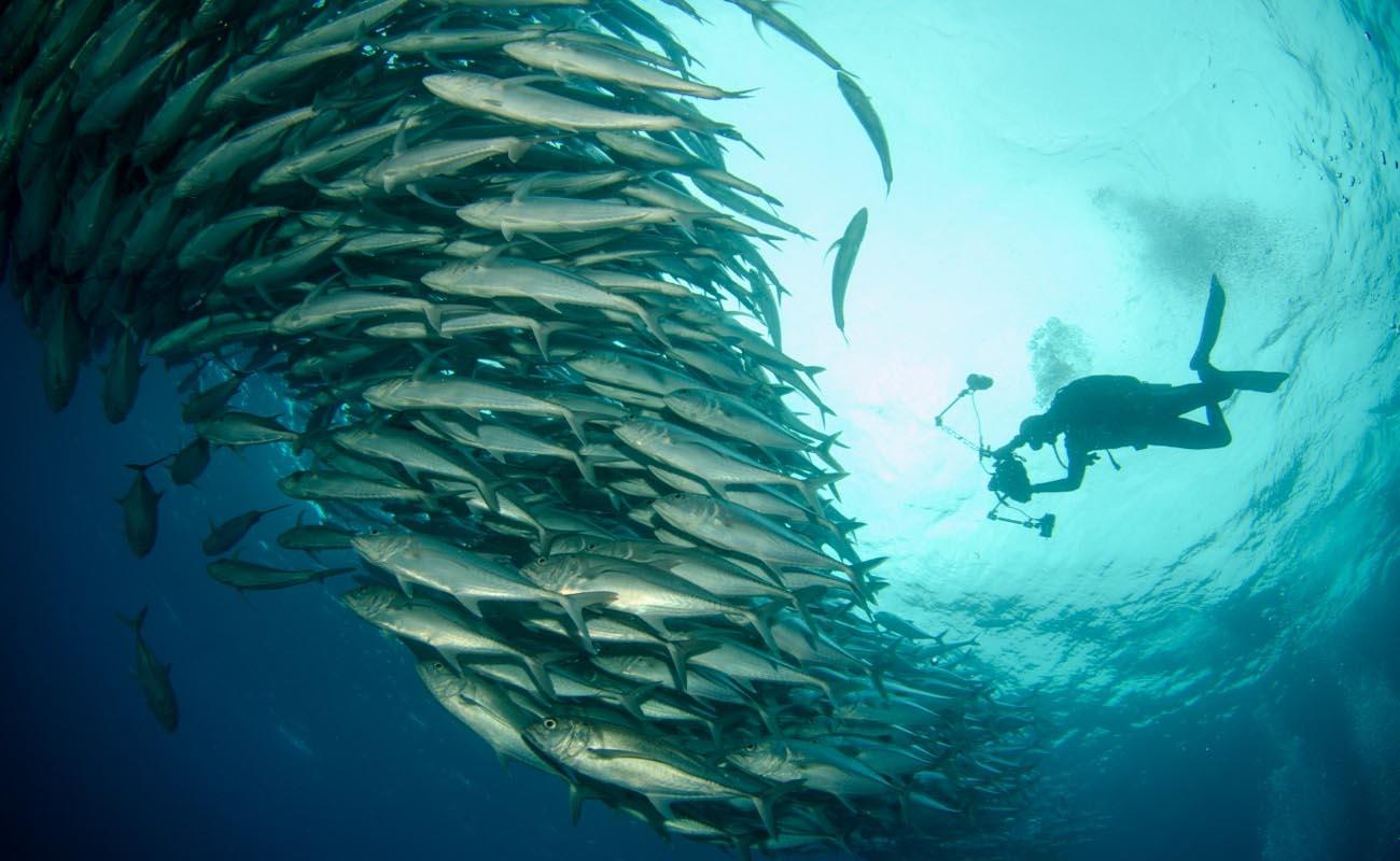 Diving School Big Island